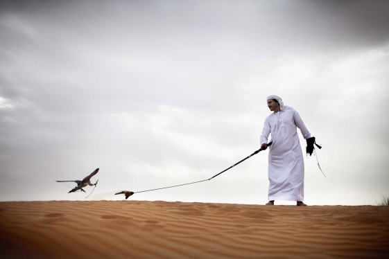 CULTURE - Desert and Falcon